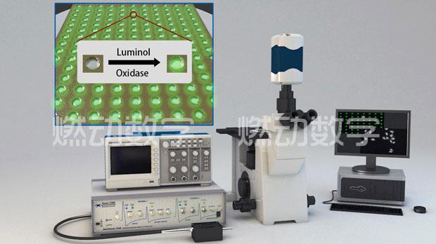 南大化学化工学院单细胞电化学分析模块三维可视化仿真